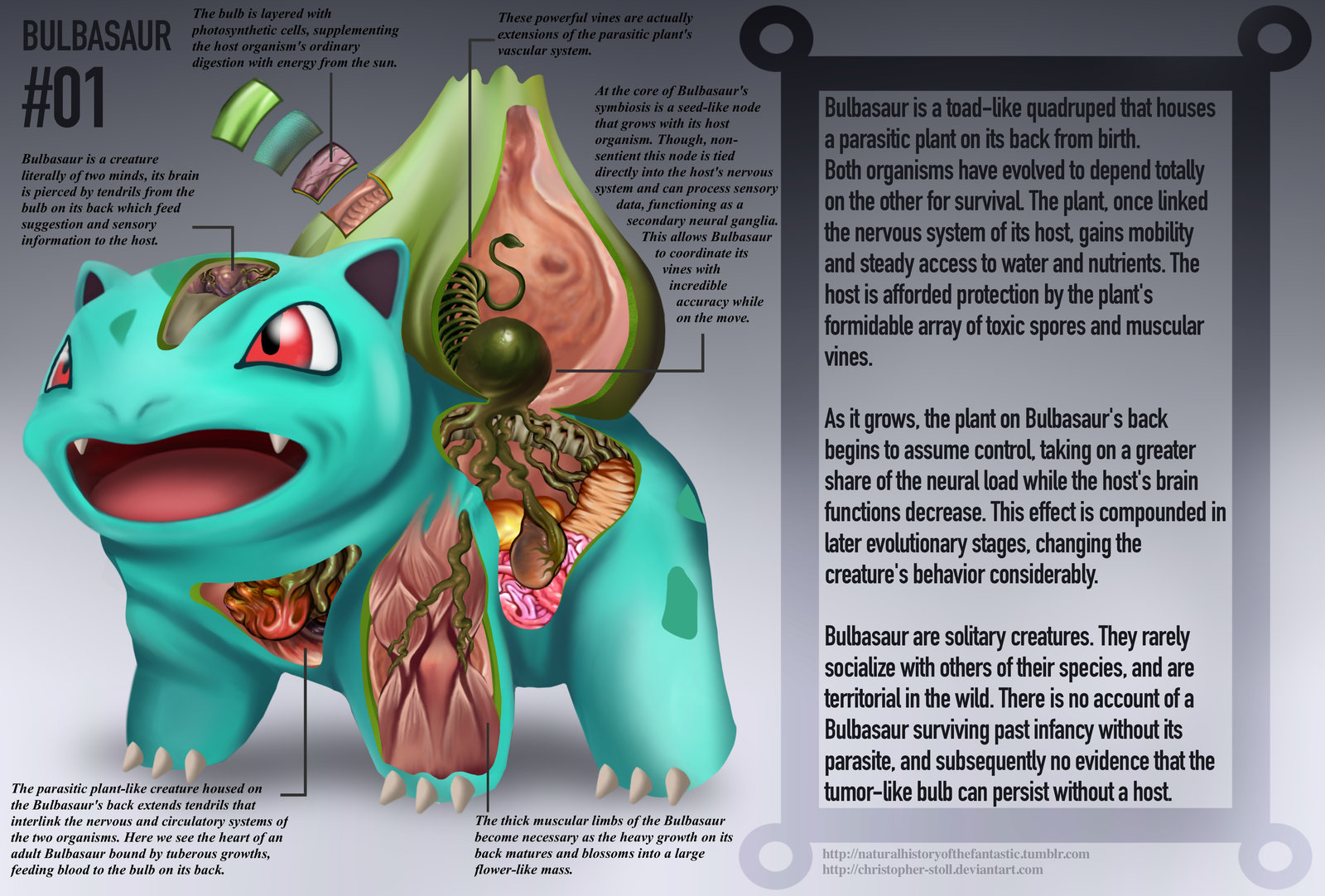 PokeNatomy bulbasaur
