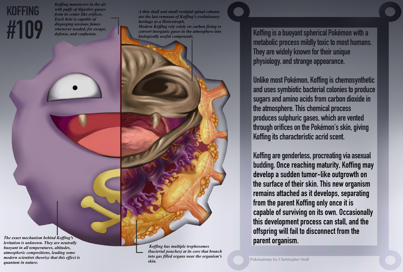 PokeNatomy koffing