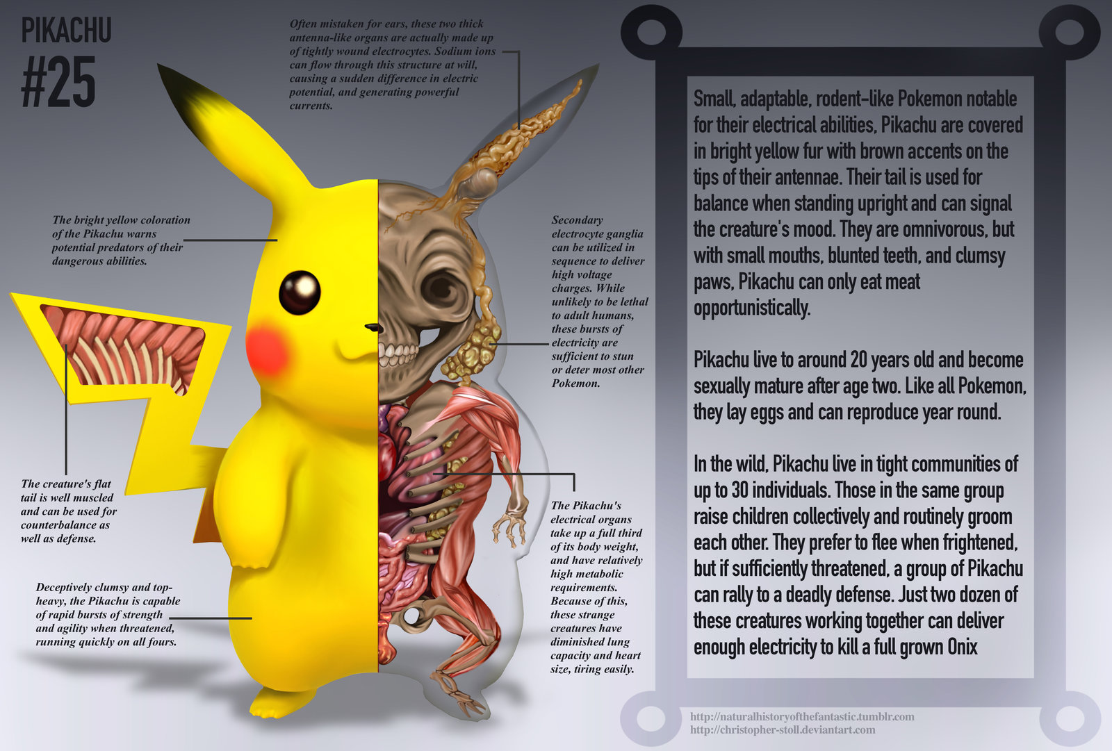 PokeNatomy pikachu