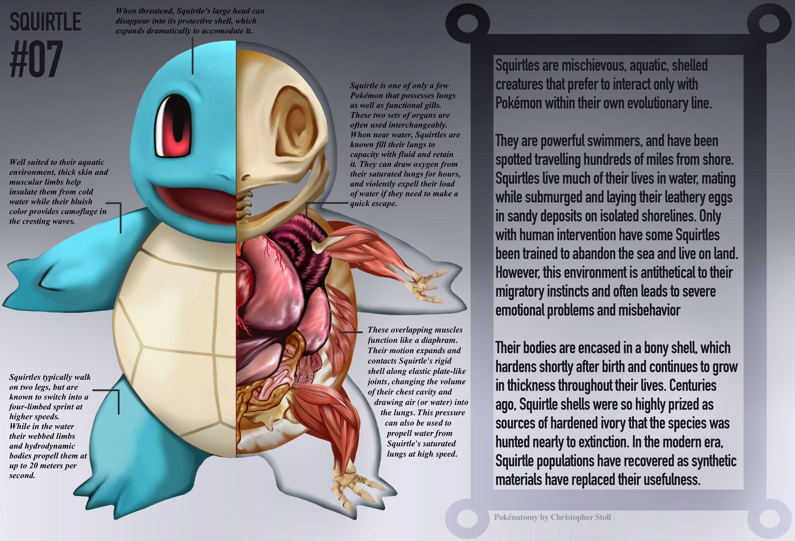 PokeNatomy squirtle